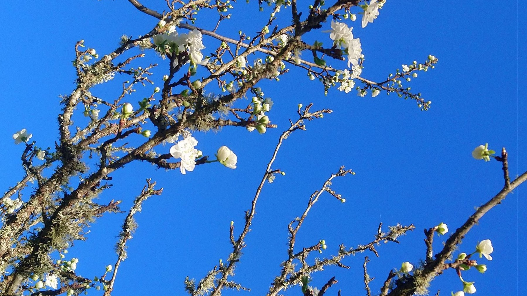 Blossoms on tree at greenvalleyportugal